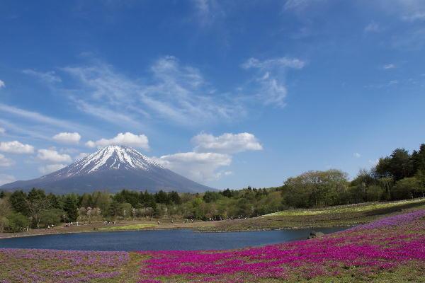 芝桜-6.jpg