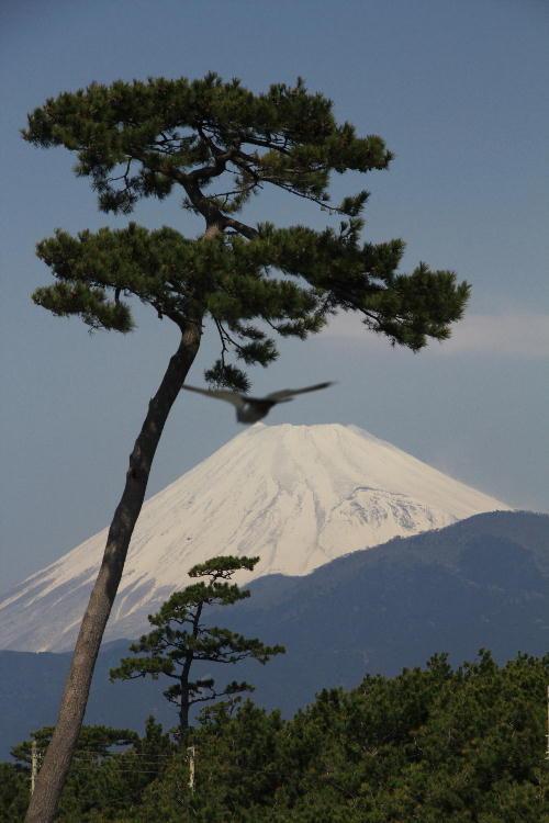 IMG_4930.jpg 3.25-11.11-千本浜の富士山2.jpg