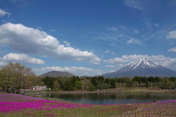 2011-5.14 芝桜-2.jpg