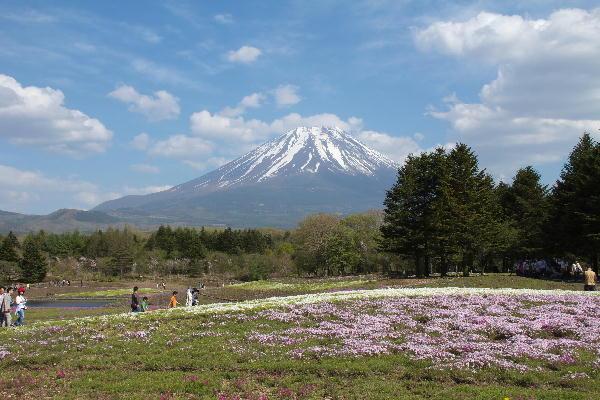 2011-5.14 芝桜-3.jpg
