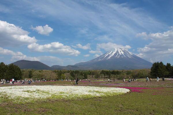 2011-5.14 芝桜-4.jpg