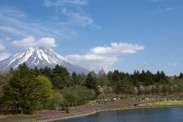 2011-5.14 芝桜-7.jpg