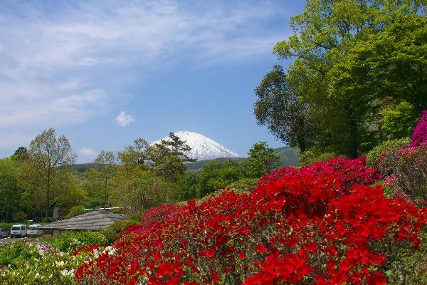 2011-5.21 富士山と躑躅2.jpg