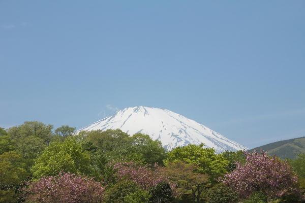 2011-5.21 富士山と躑躅5.jpg