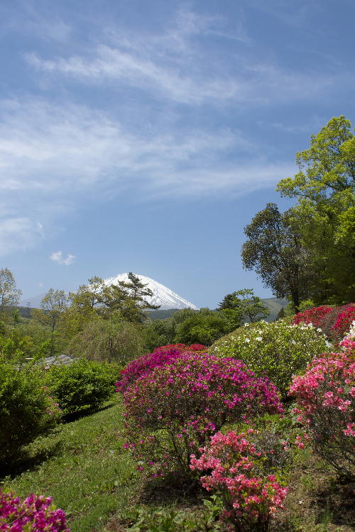 2011 5.14 富士山と躑躅.jpg