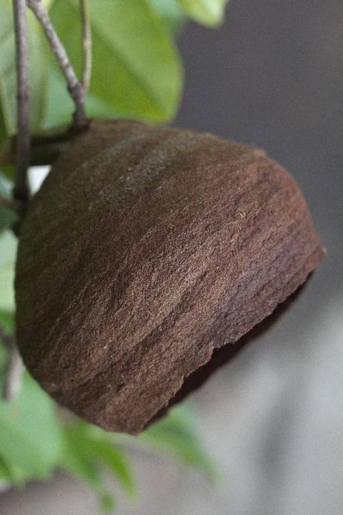 徳利蜂の巣.jpg