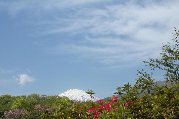 2011-5.21 富士山と躑躅4.jpg