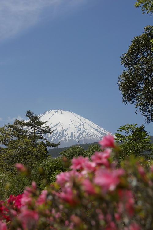 2011-5.21 富士山と躑躅3.jpg
