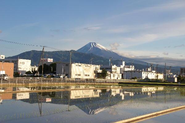2011 5.31-清水町卸売り団地 2.jpg
