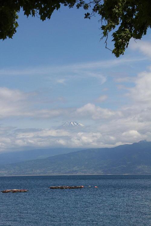 2011 5.31  西浦からの富士山.jpg