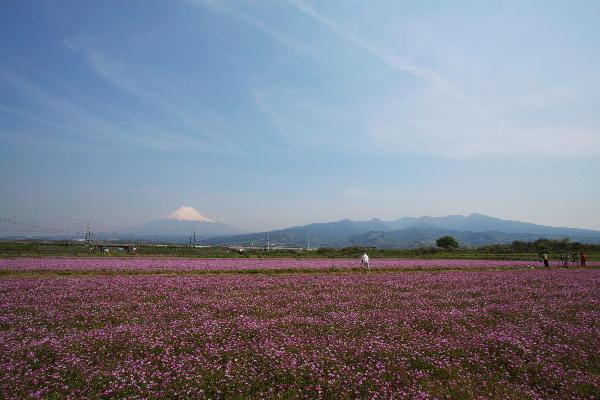 2-過去画像より富士山と蓮華-2009.5.1.jpg