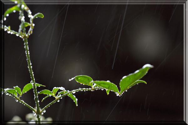 雨低速1.jpg