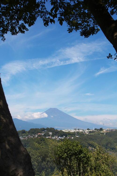 函南の富士山.jpg