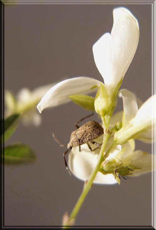 白萩と虫-1.jpg