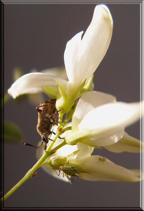 白萩と虫-2.jpg