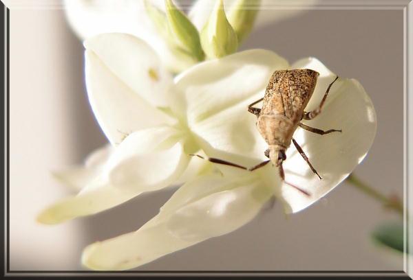 白萩と虫-3.jpg