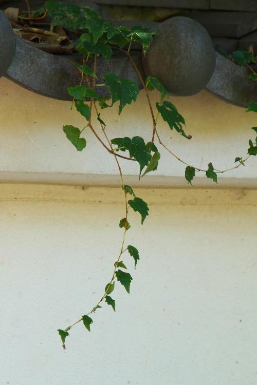 萬福寺4.jpg