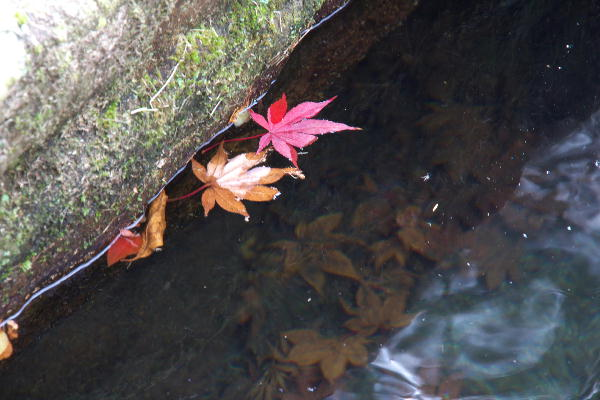 箱根美術館-4  11.26.jpg