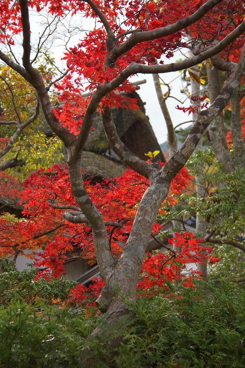 箱根美術館-8  11.26.jpg