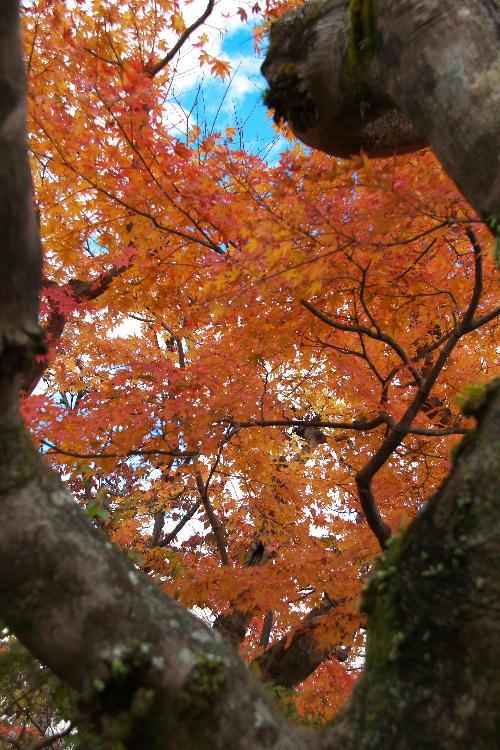 箱根美術館-7  11.26.jpg