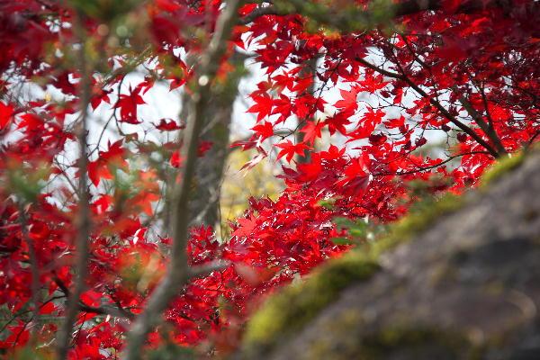 箱根美術館-9  11.26.jpg