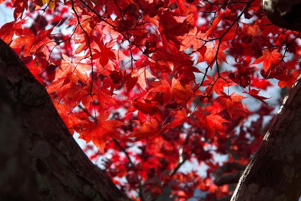 箱根美術館-10  11.26.jpg