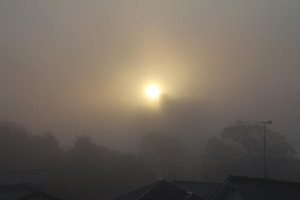 IMG_1586.jpg 12.15-7.33-霧の朝.jpg