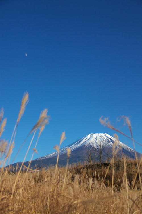 富士五湖-10 朝霧高原.jpg