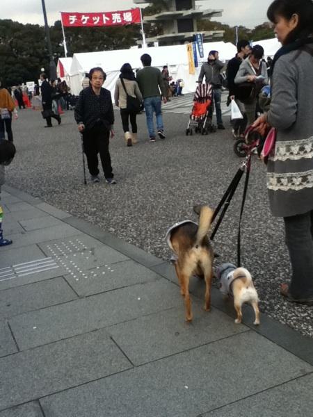 fc2blog_20121103091843138.jpeg
