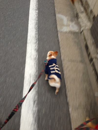 fc2blog_20121111164916239.jpg