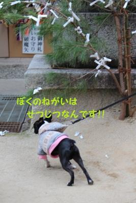 神田神社⑥