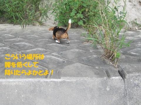 004_20110918200603.jpg