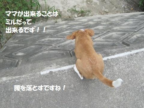 005_20110918200538.jpg