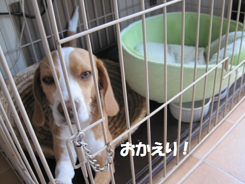 010_20110916064301.jpg