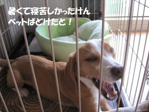 011_20110916064301.jpg