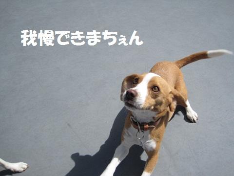 035_20110924104129.jpg