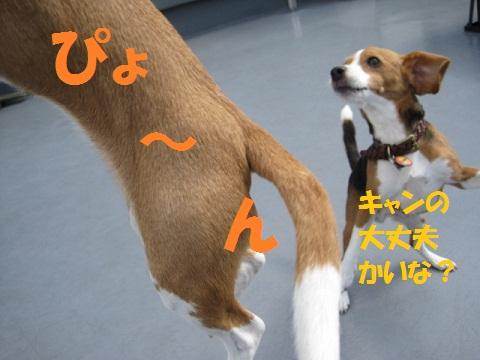 042_20110924104128.jpg