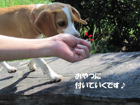 051_20110909061357.jpg
