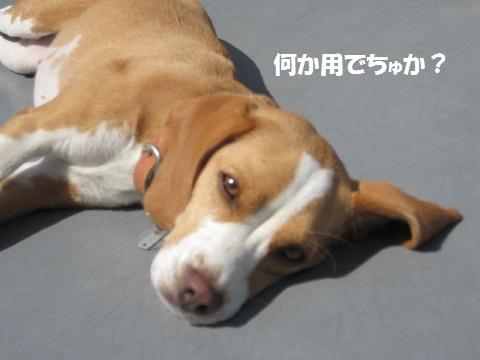 055_20110926174603.jpg