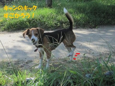 071_20110910164959.jpg