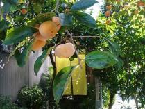 11-11-1 店と柿