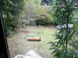 11-11-13 犬