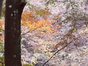 11-11-20 店へ色づいてる木