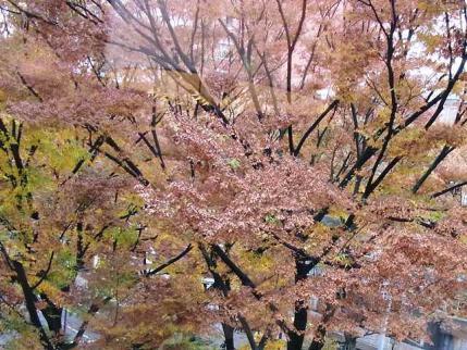11-12-1 銀杏並木