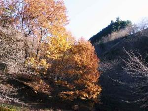 11-12-11 景色5