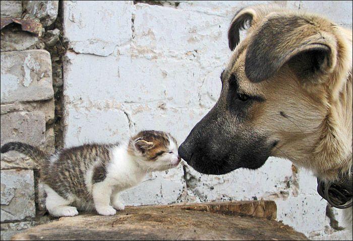 cute-kissing.jpg