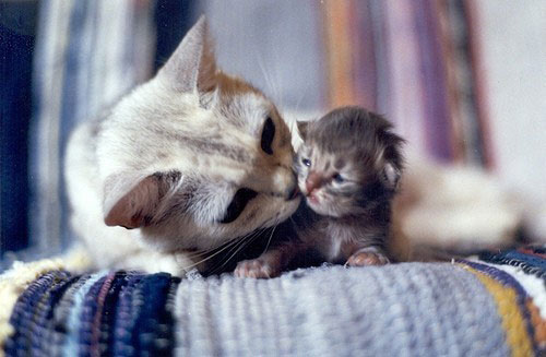mom-kiss-kitty.jpg