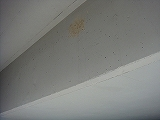 ツバメの巣_20080530