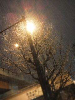 2012_01231004.jpg