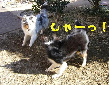 with miku1
